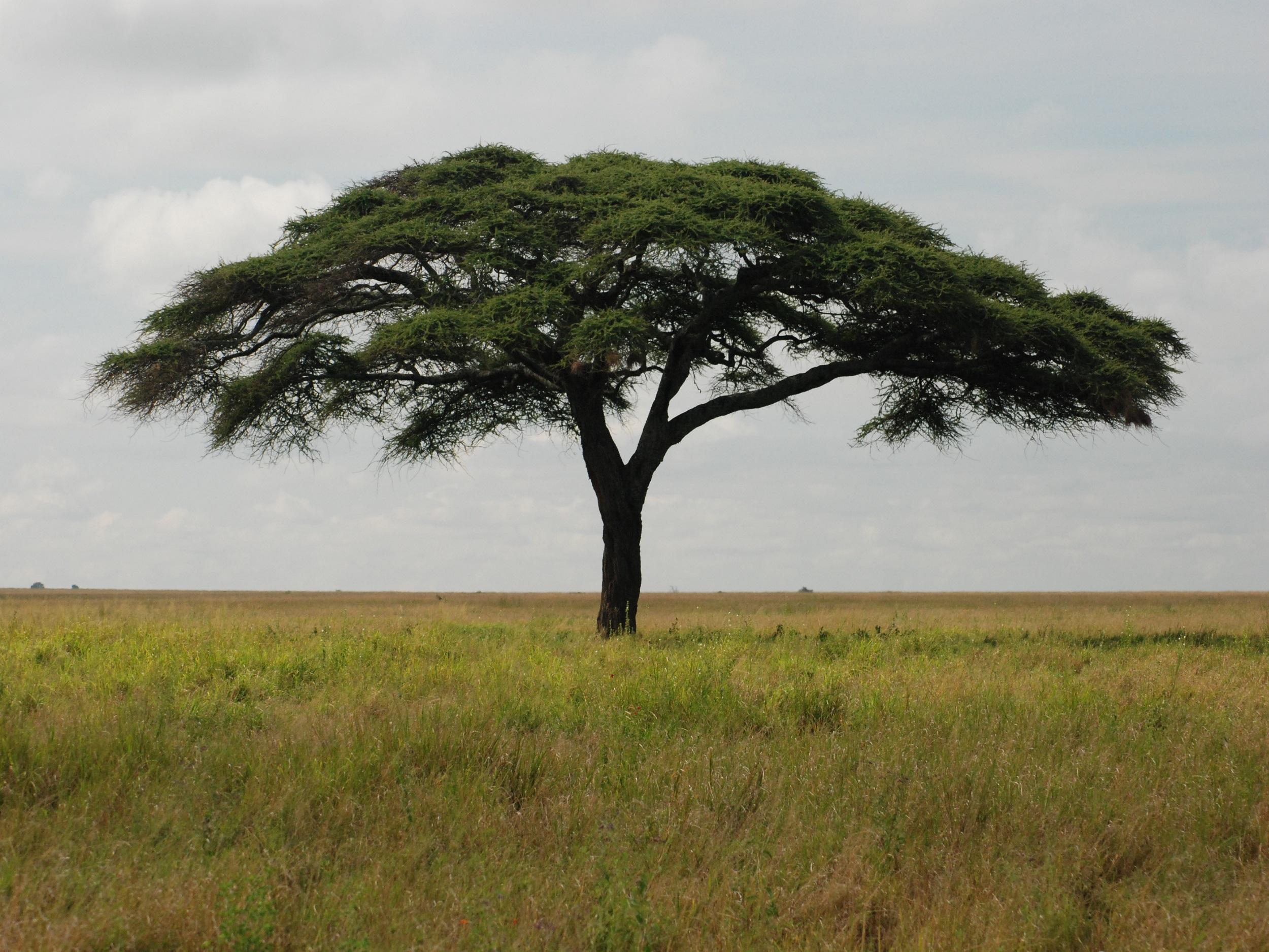 Nairobi to Cape Town Overland