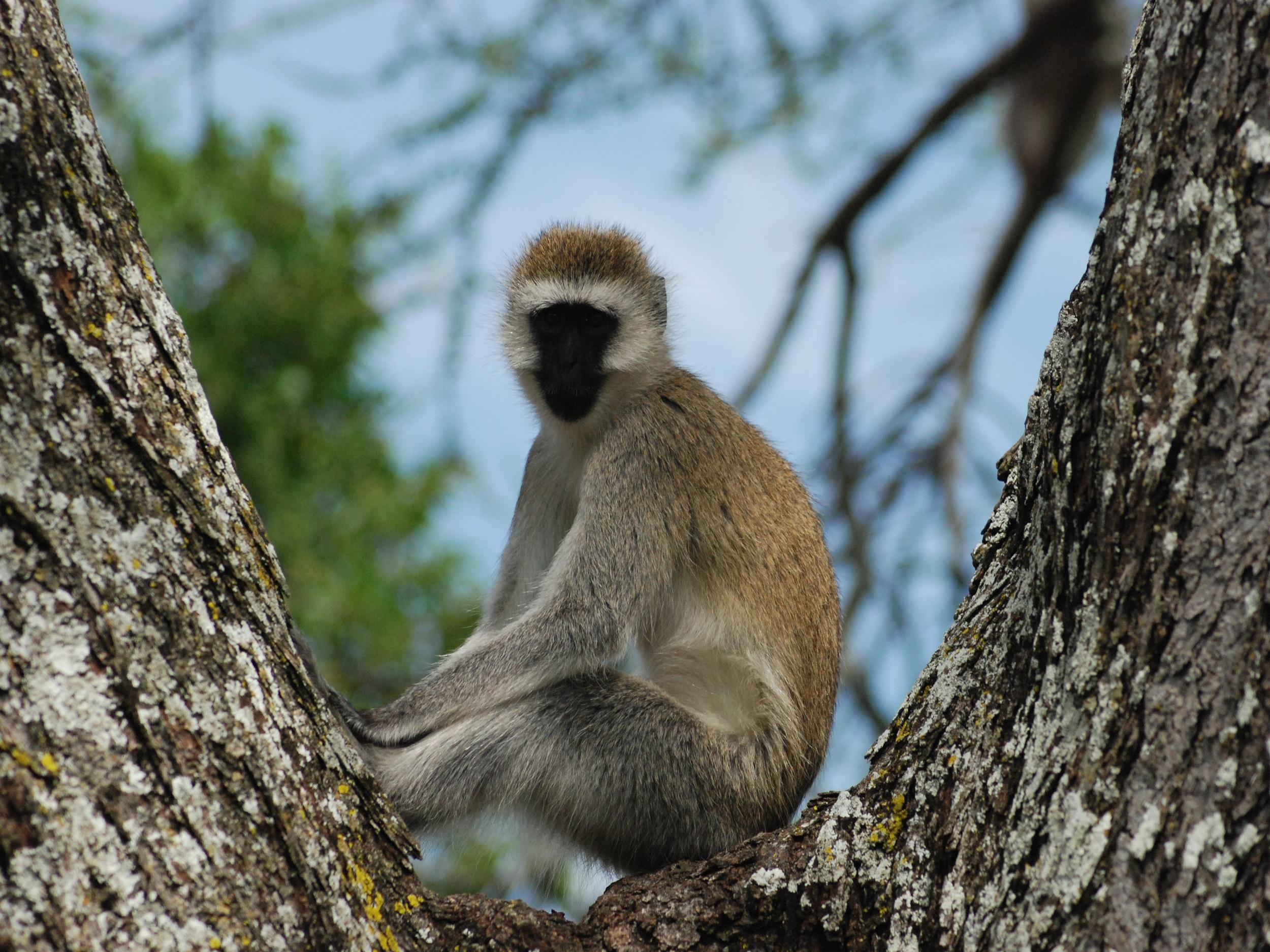 Gorillas, Game Parks & Zanzibar
