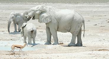 Visit Etosha National Park