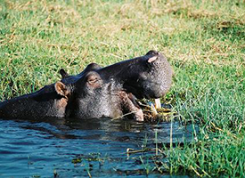 Visit Chobe National Park