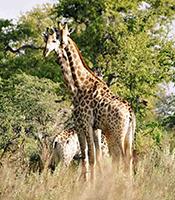 Visit Hwange National Park