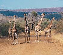 Visit Kruger National Park