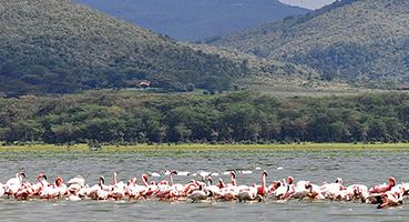 Visit Lake Naivasha