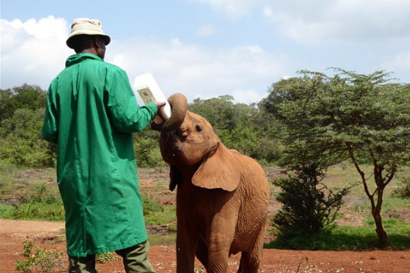 David Sheldrick Wildlife Trust in Kenya