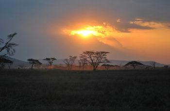 The Serengeti Park