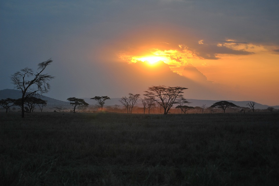 The Serengeti Park