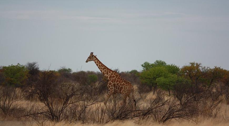 Etosha National park | Namibian Safari