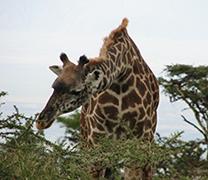 Visit Ngorongoro Conservation Area
