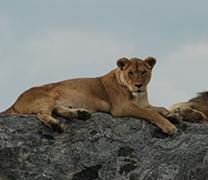 Visit Serengeti National Park