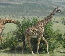 Visit Lake Nakuru National Park