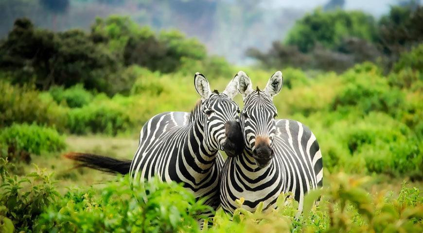 wild-kenya-safari_FI