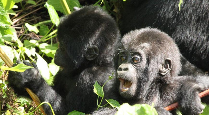 gorilla-trekking_FI